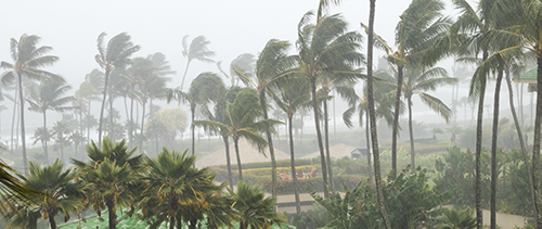 Palms in a Hurricane
